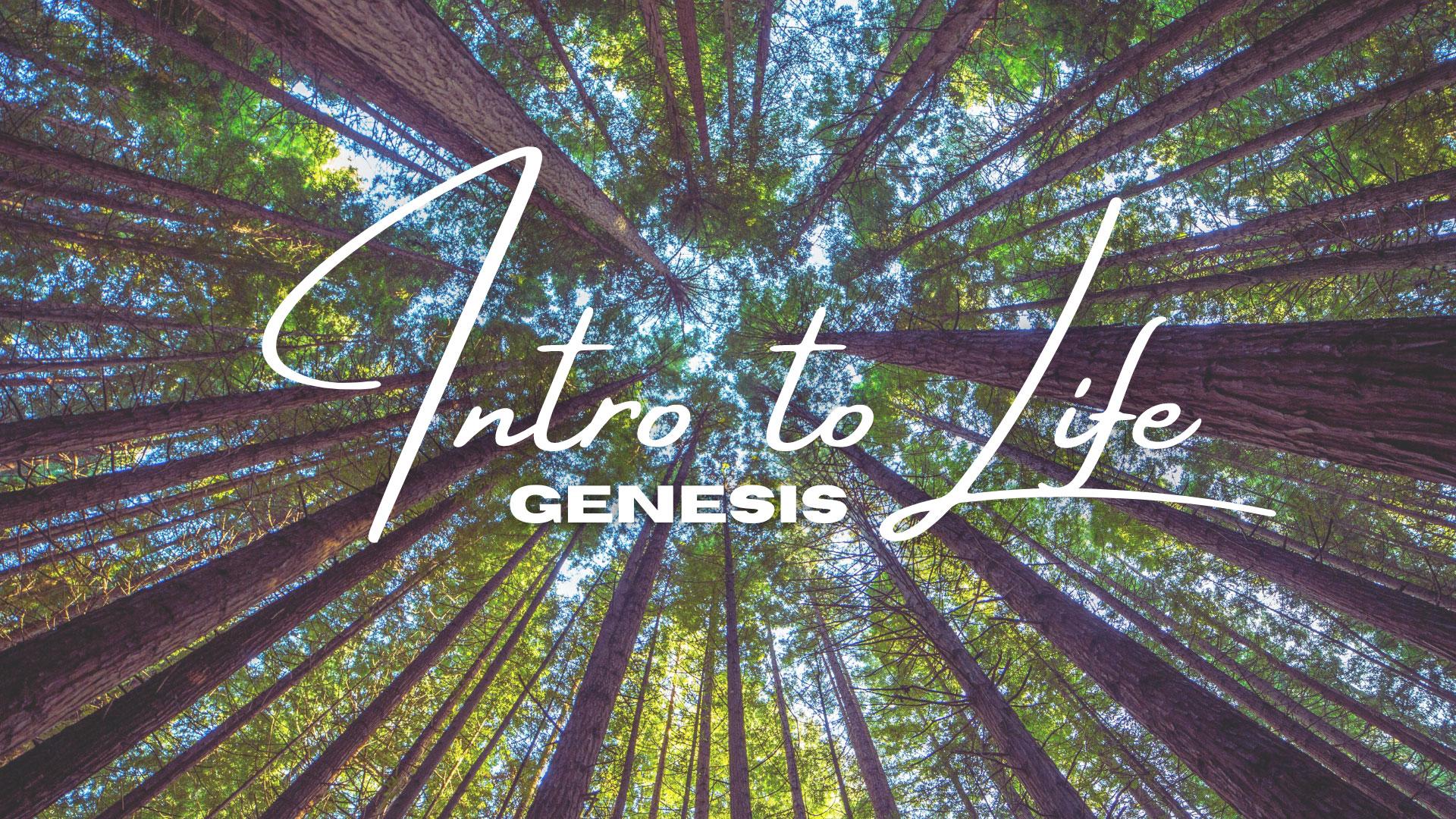 Intro To Life